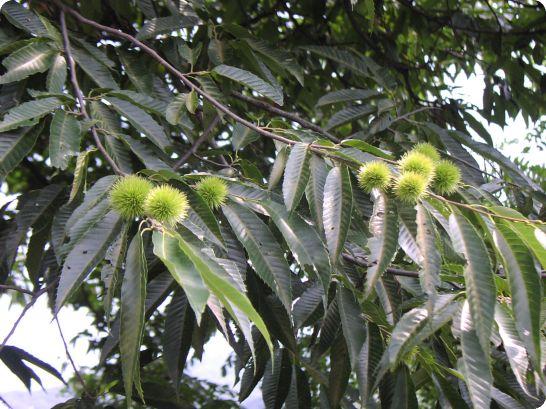남한산성의 꽃과 과일들