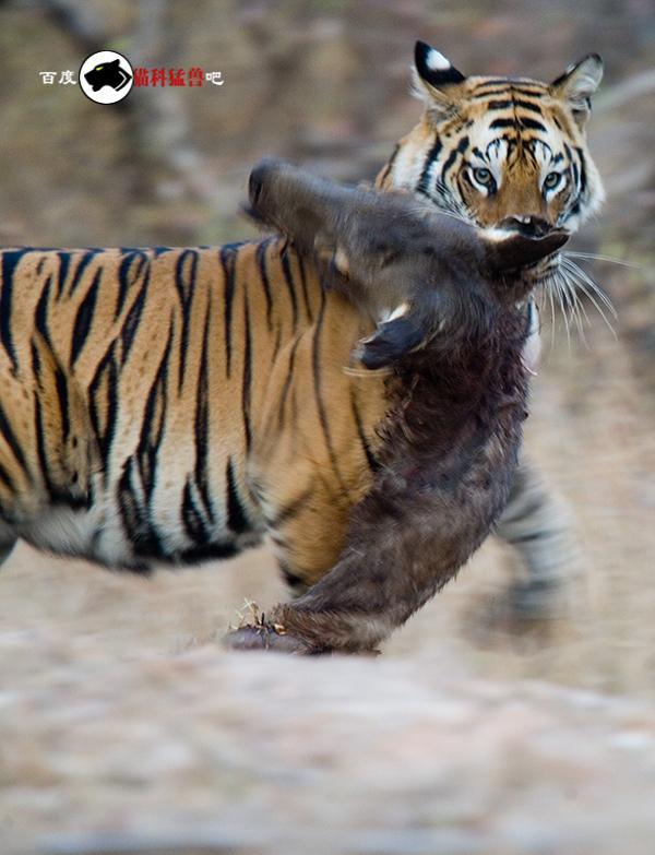 转帖野生动物图片